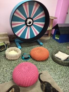 The cat wheel which the kittens love